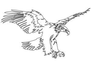 Blazer homme personnalisable_Doublure au dessin de l'aigle par Charles Landston la créatrice et styliste_Dessin au trait vectoriel